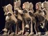 11 balet Šípková Růženka